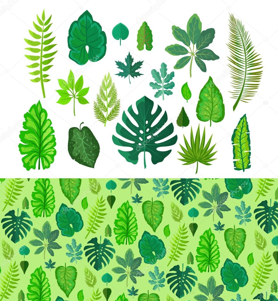 Set of Tropical Leaves. Collection  Green Leafs.