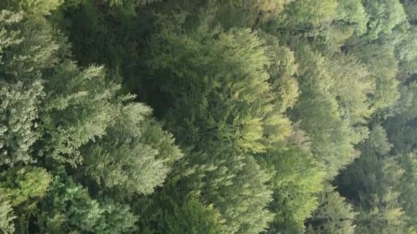Vertikální video letecký pohled na stromy v lese.