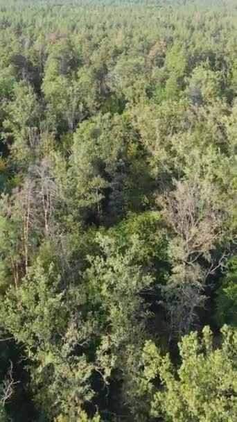 Aerial view of trees in the forest. Vertical video