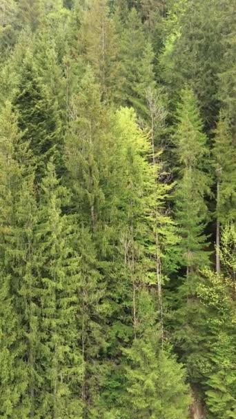 Letecký pohled na stromy v lese. Svislé video