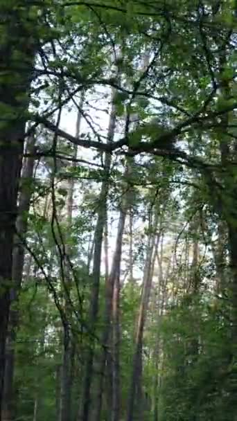 Vertikální video mnoha stromů v lese