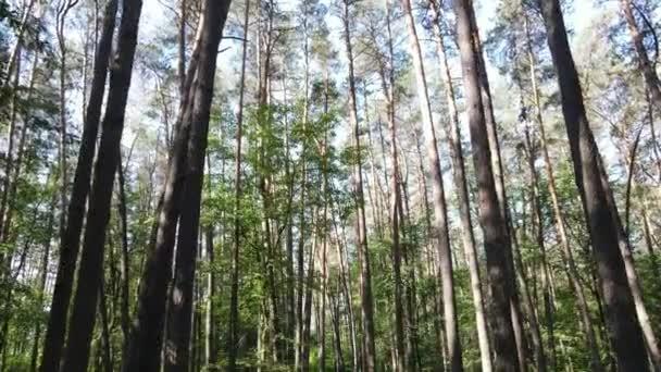Stromy v lese do letního dne