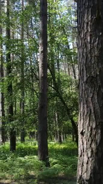 Függőleges videó egy nyári zöld erdő fák a nap folyamán, lassított felvétel