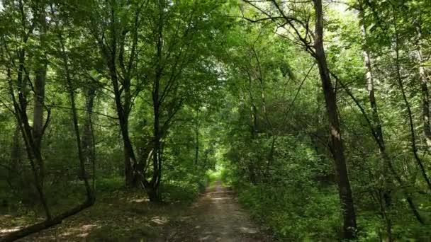 Les se stromy za letního dne, zpomalený pohyb