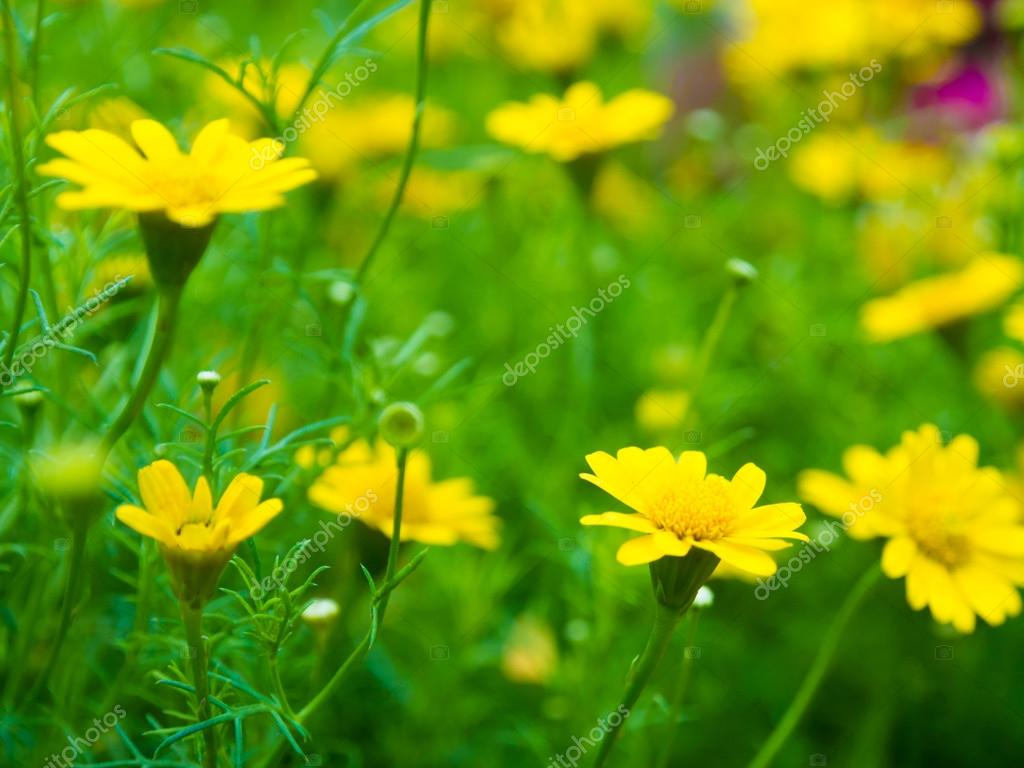 Spring Scene Background With Beautiful Yellow Flowers Stock Photo