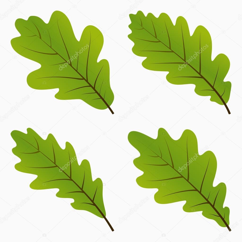Дубовые листья Зеленые дубовые листья — Векторное