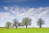 Landscape with a few trees and clouds in a blue sky.