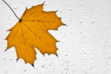 Colorful autumn leaves and raindrops on the window