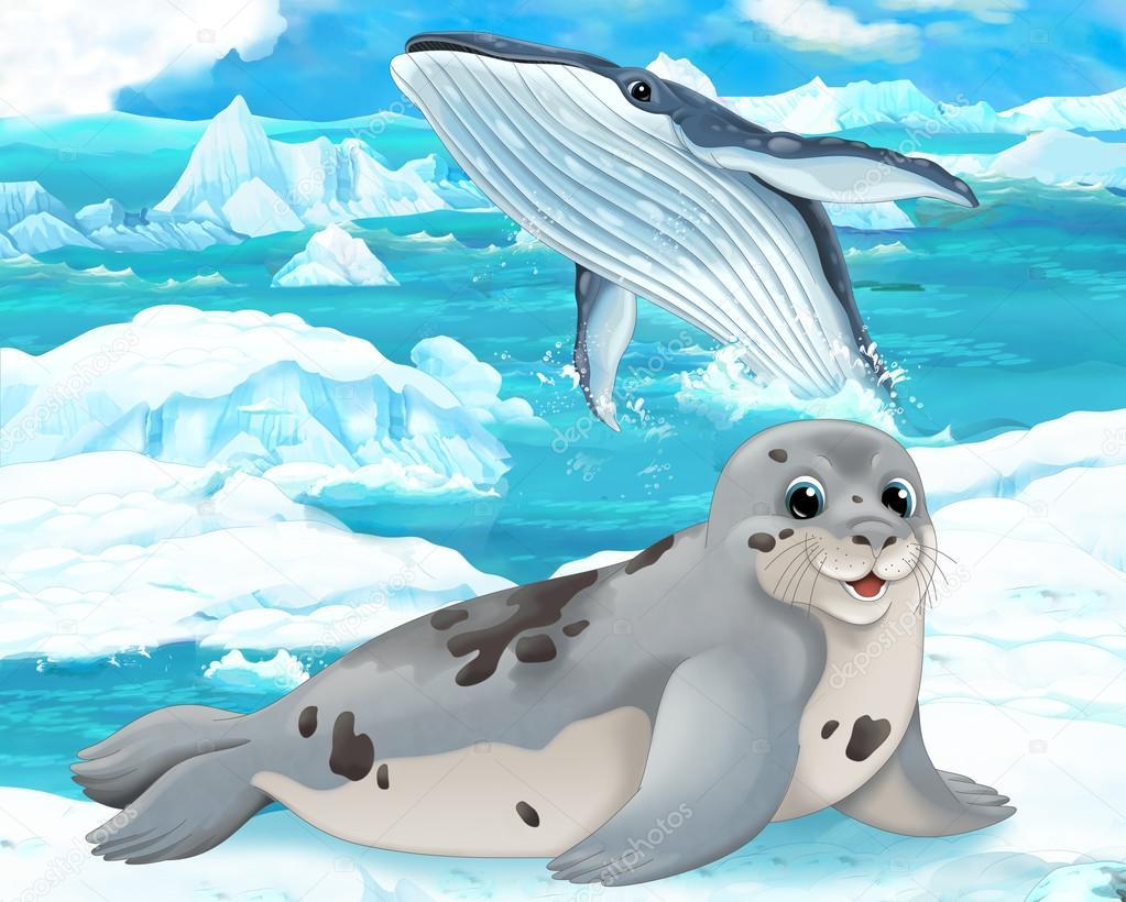 Phoques Et Baleines Photographie Agaes8080 60450243