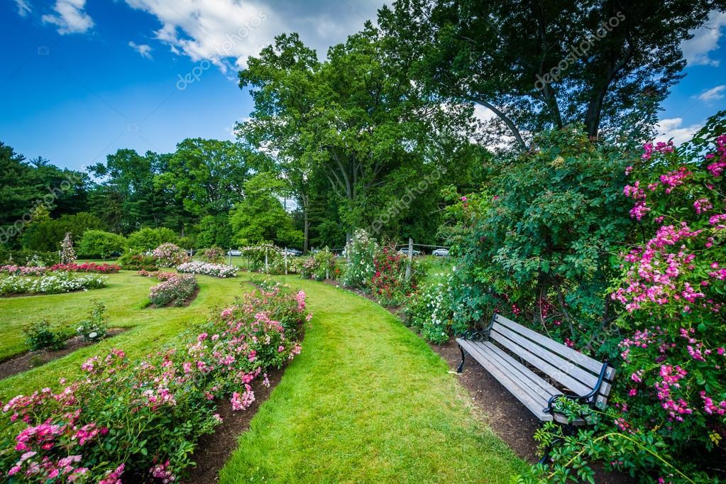 Giardini di rose a elizabeth park a hartford connecticut u2014 foto