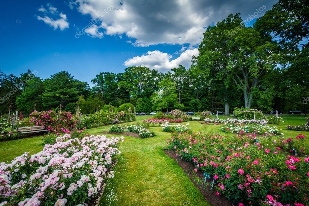 Giardini di rose a elizabeth park a hartford connecticut u foto