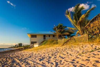 Palm trees and beach house on Jupiter Island, Florida.