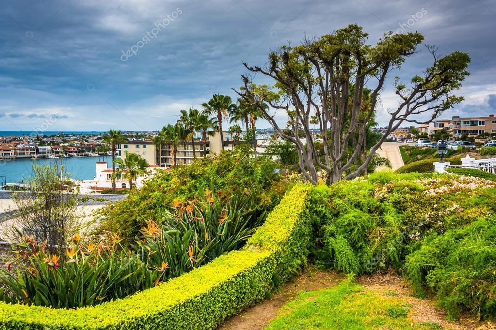 Baum Und Garten baum und garten mit blick auf häuser in corona mar kalifornien