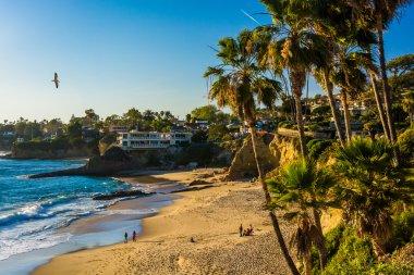 Palm trees and view of the Pacific Ocean, at Heisler Park, Lagun
