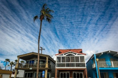 Palm tree and beachfront houses in Newport Beach, California.