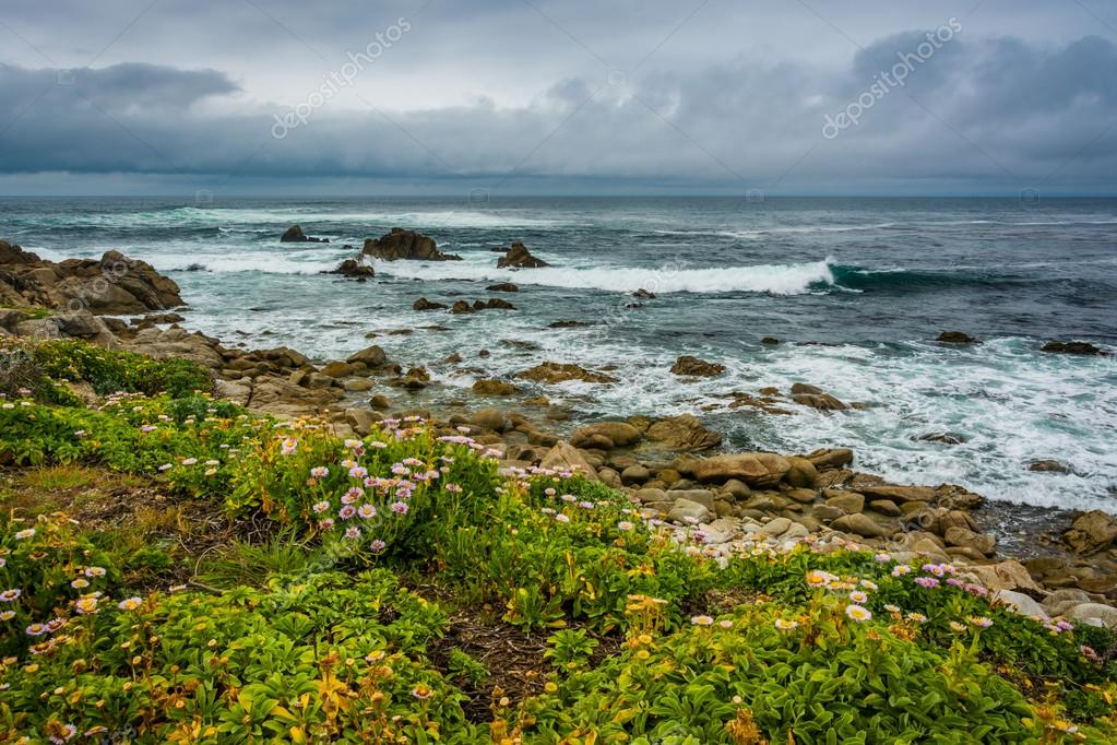 Flowers and view of the rocky Pacific Coast, seen from the 17 Mi