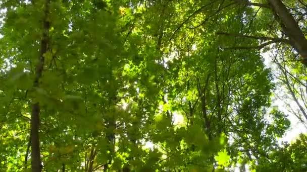 Sonne bricht durch grüne Blätter.