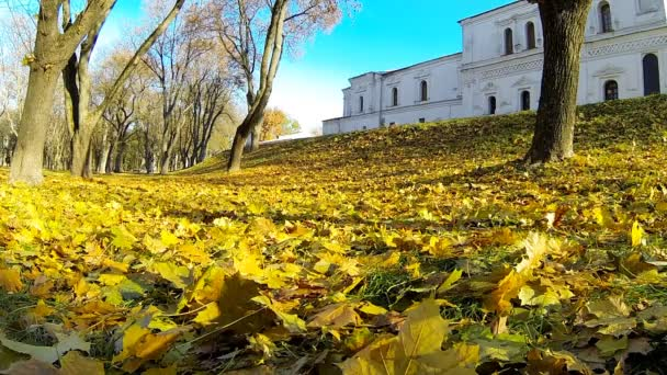 Video of a man running the fallen yellow leaves.