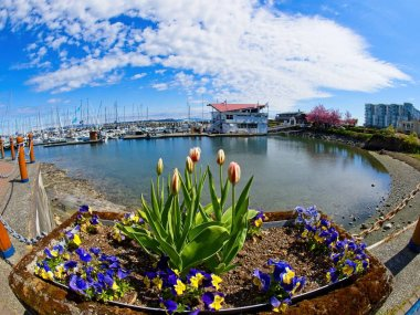 Spectacular walkway along the shoreline of Sidney BC, Vancouver Island in the springtime