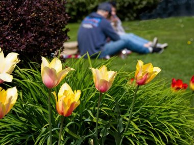 Young couple having a picnic on the grass lawn of Sidney BC, Vancouver Island in the springtime