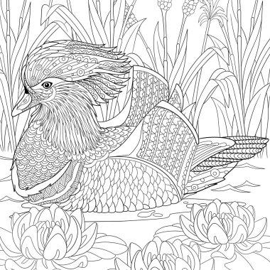 Zentangle stylized mandarin duck