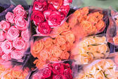 Fotografia Belle rose variopinte