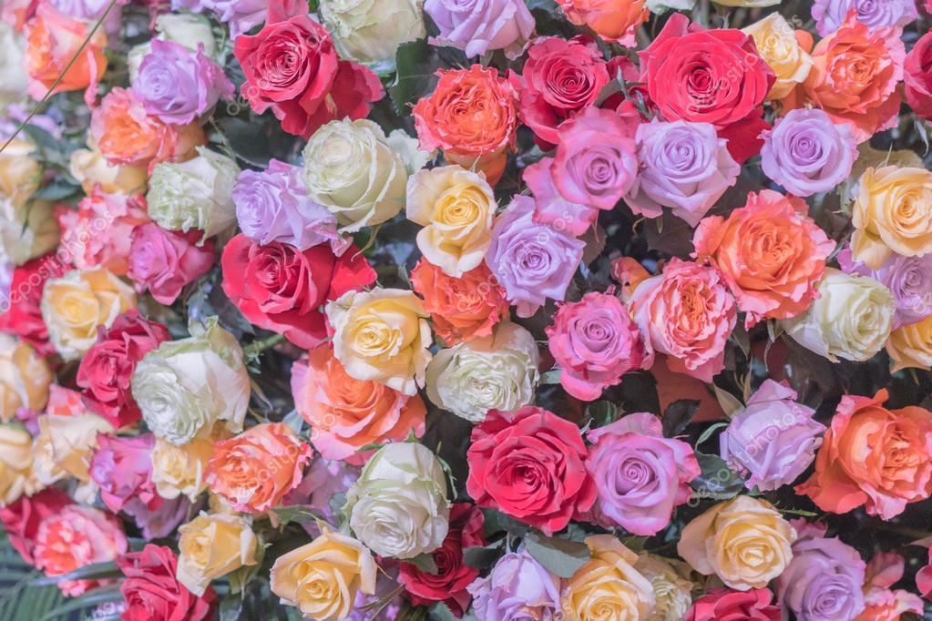 beautiful colorful roses