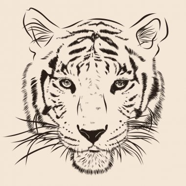 Original artwork tiger with dark stripes, isolated on white background, and sepia color version, vector llustration