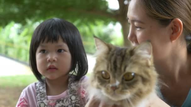 4k: krásné malé asijské dívky a matka hraje s perskou kočku