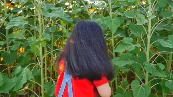 Asijské dítě mává v poli slunečnice