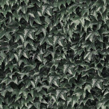 Seamless wall creeping ivy