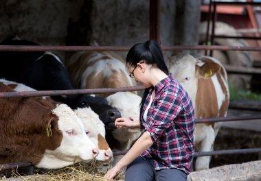 Farmer girl with heifers