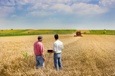 Business people on wheat field