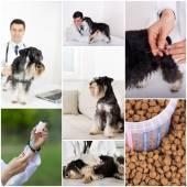 veterinární péče o sbírky