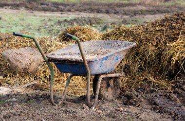 Wheelbarrow with cattle manure