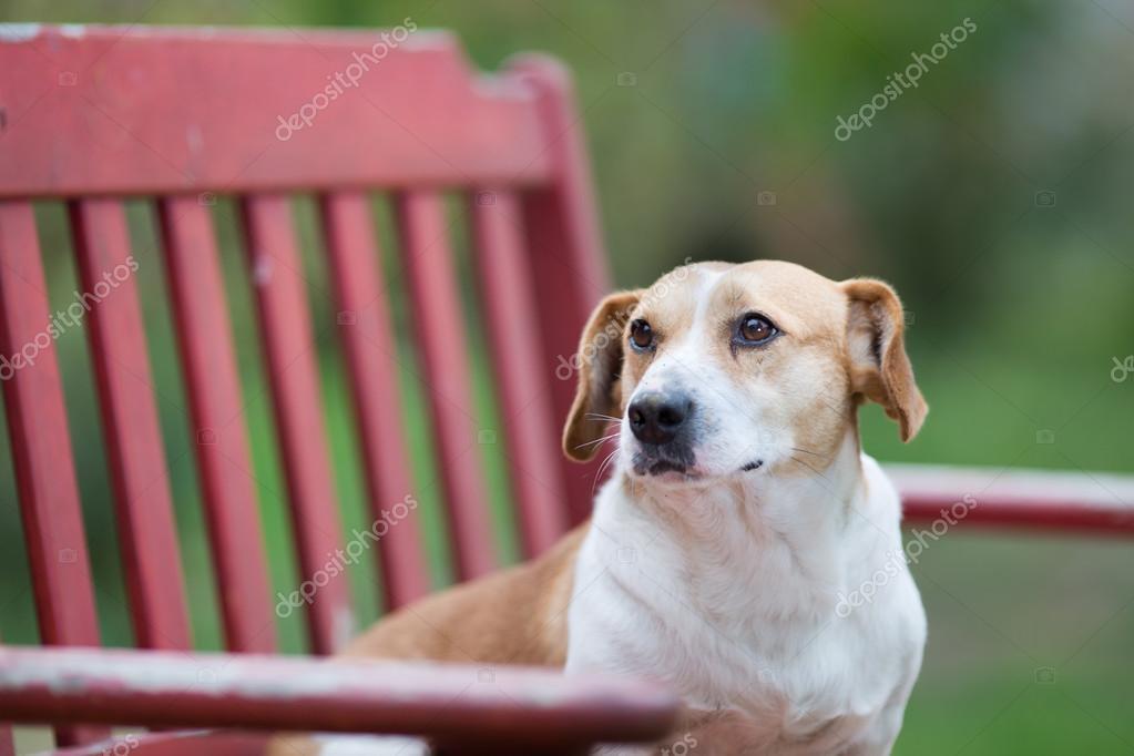 Tremendous Small Dog On The Bench Stock Photo C Budabar 87497980 Frankydiablos Diy Chair Ideas Frankydiabloscom