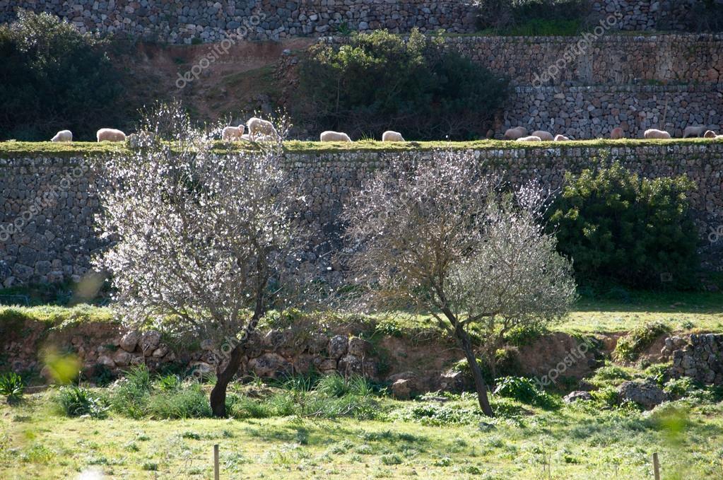 Giardino terrazzato con pecore — Foto Stock © ArtesiaWells #63730125