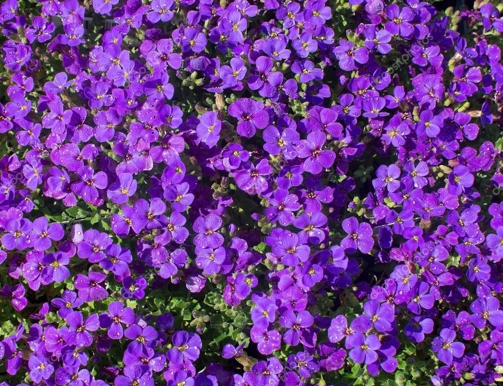 Marco completo de flores de color púrpura — Fotos de Stock ...