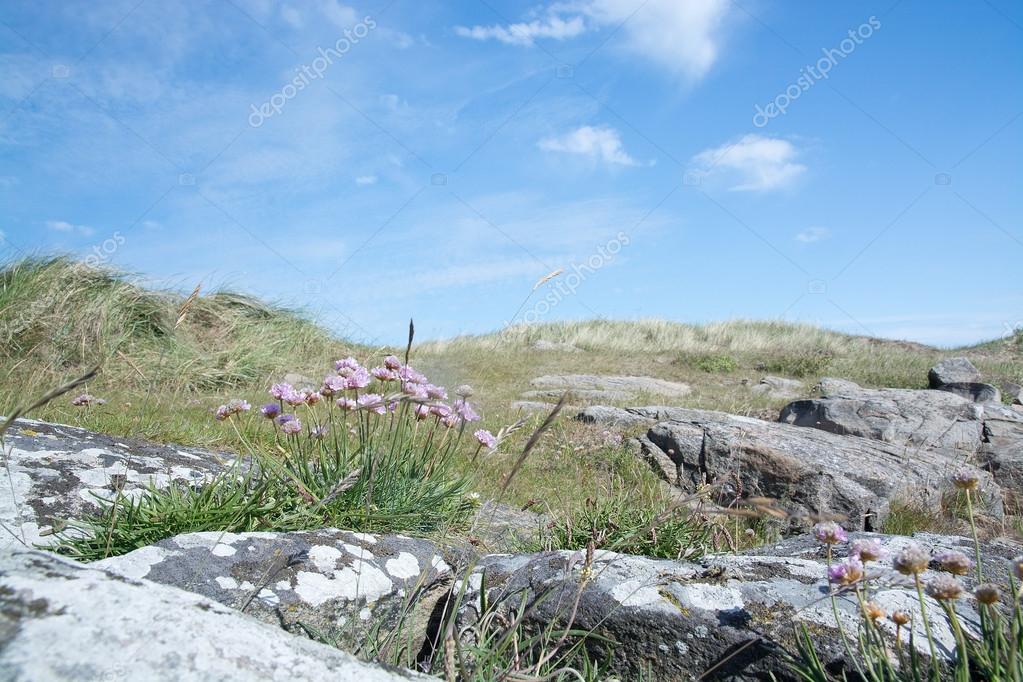 de bord de mer avec fleurs rose aubaines — photo #75618661