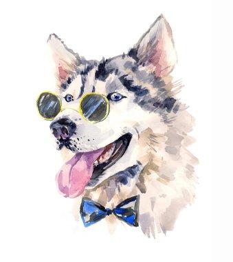 Handsome watercolor husky in bow-tie and dark sun glasses