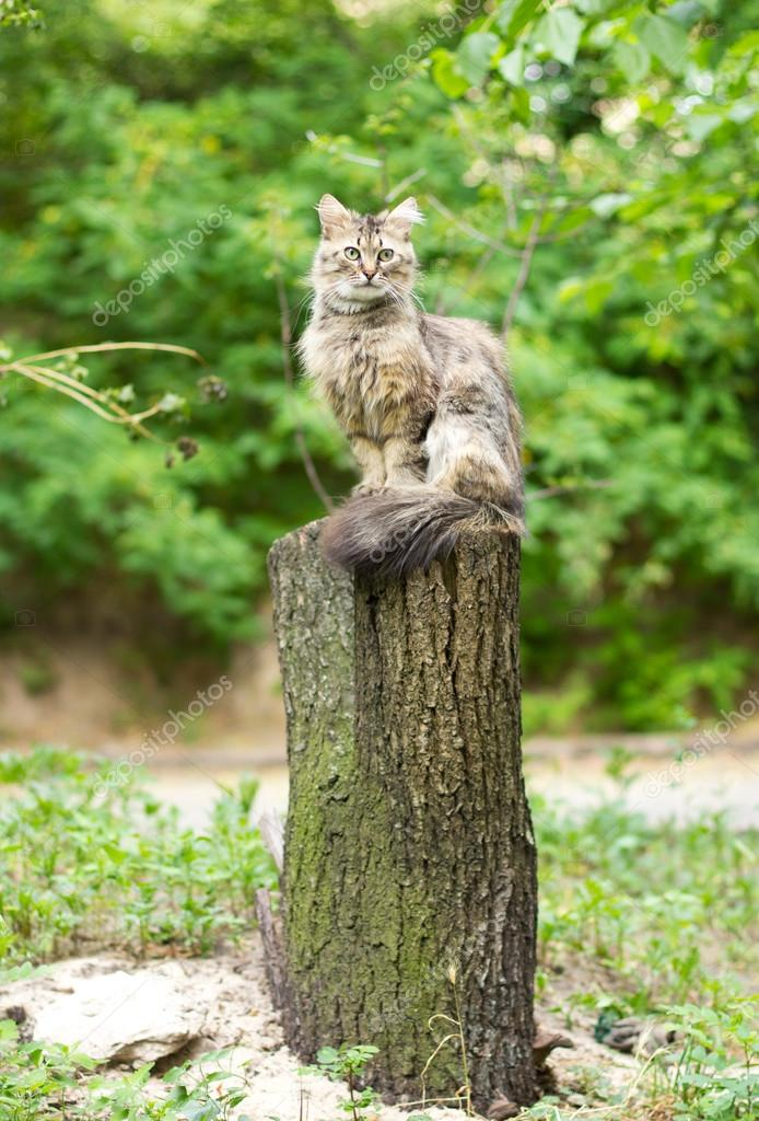 Adult cat sitting on a tree stump outdoors