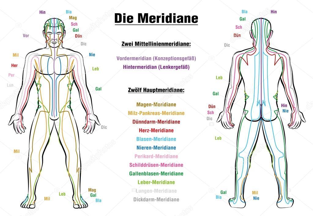 Meridian system description chart german furian