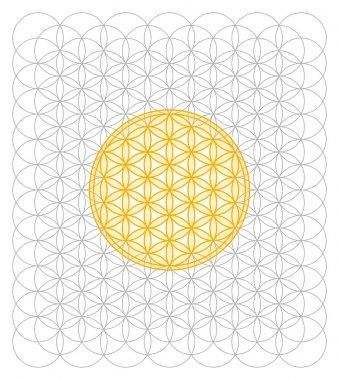 Development of the Flower of Life