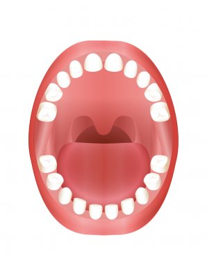 Baby Teeth Teething Children Mouth