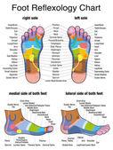 Fotografie Reflexology Plantar Sole Profile Feet