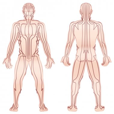 Meridians Male Body TCM