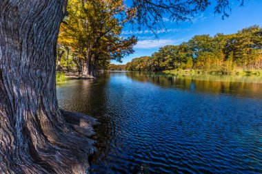 Bright Beautiful Fall Foliage on the Crystal Clear Frio River in Texas.