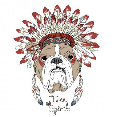 english bulldog in war bonnet