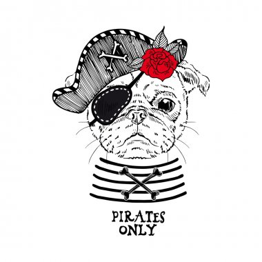 Pug pirate with rose