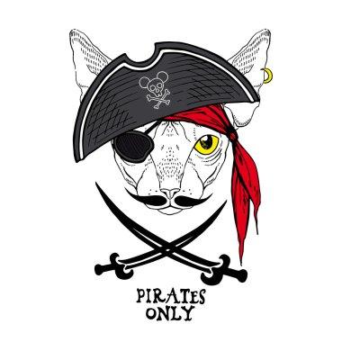 Cat pirate in hat